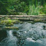 Белые мосты водопад Карелия