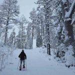 На снегоступах по Карелии