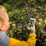 Фото белый гриб в Карелии