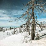 Мертвый лес Воттоваара