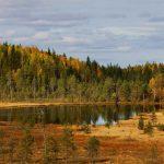 autumn landscape. nature. Karelia. Russia
